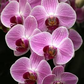 Lots of Orchids by Sabrina L Ryan