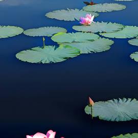 Lotus 2 by Sam Davis Johnson