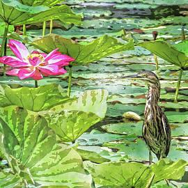 HH Photography of Florida - Lotus And Green Heron