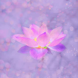 Lotus Emerging from the Water by Lena Photo Art