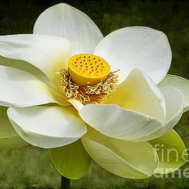 Teresa Zieba - Lotus Flower