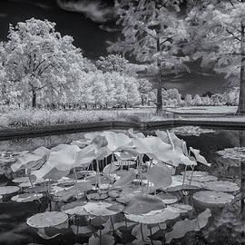Greg Kluempers - Lotus Plant Near Jewel Box Forest Park - IR_DSC0874_06052017