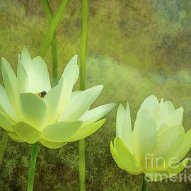 Lotus Study by Susan Cole Kelly