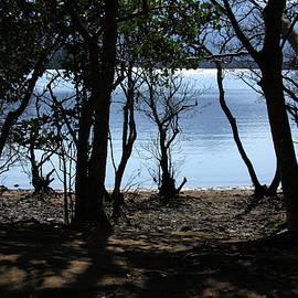 Aidan Moran - Lough Leane Through The Woods