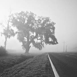 Louisiana Hwy 308 by Scott Pellegrin