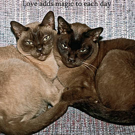 Love adds magic to each day by Sally Weigand