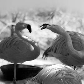 Love  Birds by Maria Reverberi