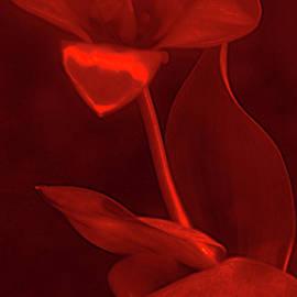 LOVE for RED FLOWER # 2. by Alexander Vinogradov