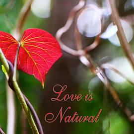 Olivia Novak - Love is Natural