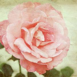 Love Rose by Toni Hopper