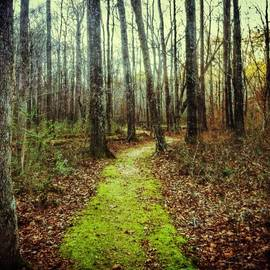 Loved This Moss Covered Path #explore