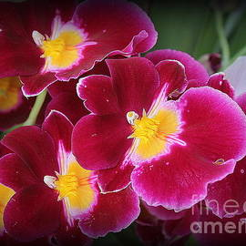 Dora Sofia Caputo Photographic Art and Design - Lovely Orchids in Red and Gold