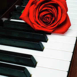 Lovely Rose On Piano Keys - Garry Gay