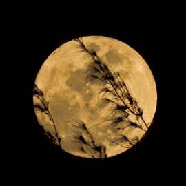 Lover's Moon by Pamela Walton