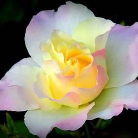 Rosanne Jordan - Loves Bounty in a Rose