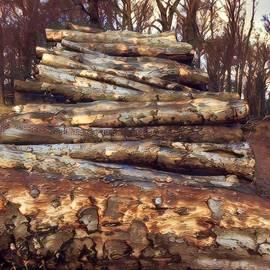 Colette V Hera Guggenheim - Loving the Forest