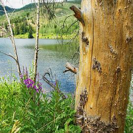 Lorraine Baum - Lower Cataract Lake