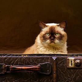 fbmovercrafts - Luggage Cat