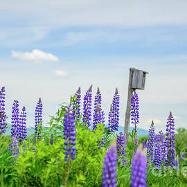 Alana Ranney - Lupines and Bird House