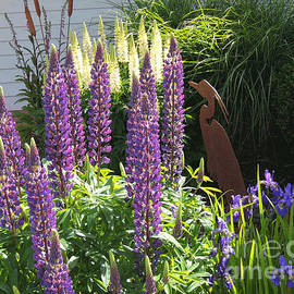 Beverly Guilliams - Lupinus