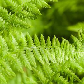 Marcus Karlsson Sall - Luscious fern