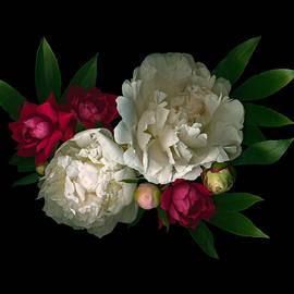 Luscious Peonies Horizontal by Deborah J Humphries