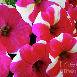 Luxuriant Petunia by Jasna Dragun