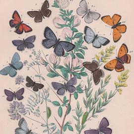 W Kirby - Lycaenidae