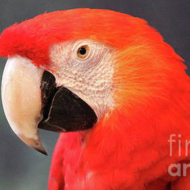 Gary Gingrich Galleries - Macaw-3618