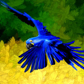 Bruce Nutting - Macaw in Flight