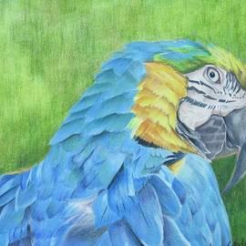 Jenny Andreoli - Macaw