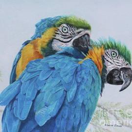 Elaine Jones - Macaw Mischief