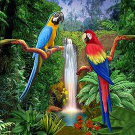 Glenn Holbrook - Macaw Tropical Parrots