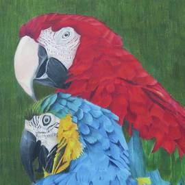 Jenny Andreoli - Macaws