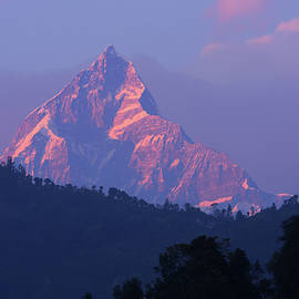 Aidan Moran - Machhapuchchhre In Evening Light