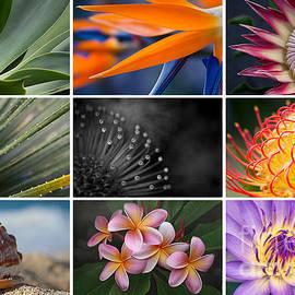 Sharon Mau - Macro Collage