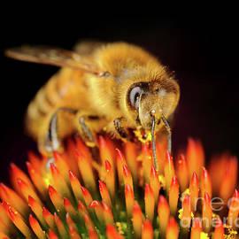 Terry Elniski - MACRO PHOTOGRAPHY - BEES - 12
