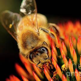 Terry Elniski - MACRO PHOTOGRAPHY - BEES - 13