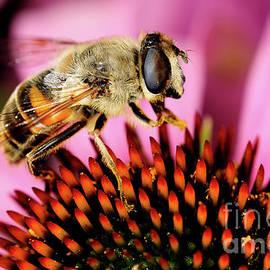 Terry Elniski - MACRO PHOTOGRAPHY - BEES - 15