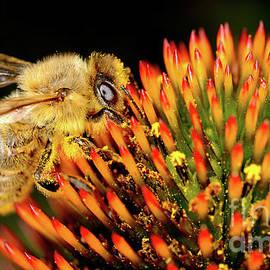 Terry Elniski - MACRO PHOTOGRAPHY - BEES - 17