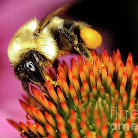 Terry Elniski - MACRO PHOTOGRAPHY - BEES - 9