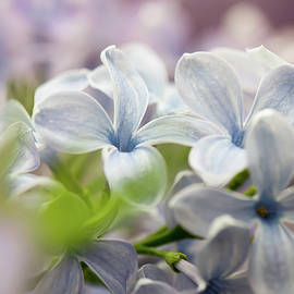 Macro shot of lilac flower by Beautiful Things