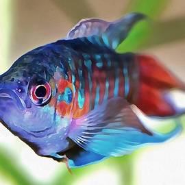 Tracey Harrington-Simpson - Macropodus opercularis Paradise Fish