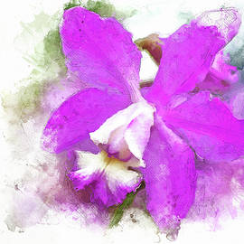 Magenta Cattleya by Cyndy Doty