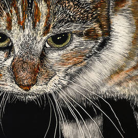Maggie the Cat by Robert Goudreau