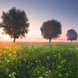 Magic Morning by Stanislav Salamanov
