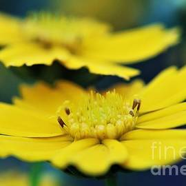 Magical Daisy Moment by Dee Leah G