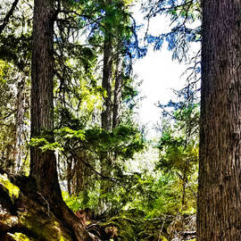 Susan Kinney - Magical Glacier Forest
