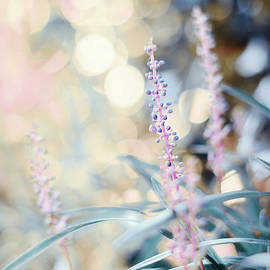 Magical Mystery -Bokeh -Macro by Adrian De Leon Art and Photography