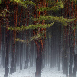 Magical Pines by Betty Pauwels